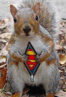 Superman's pet is the squirrel found taking all the seed from the bird feeder.