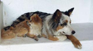 ¿Un año de perro equivale a siete de humanos?