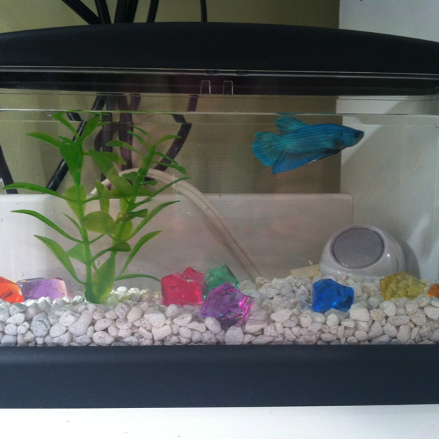 my new fish a 5 dollar tank from walmart and a night light and my