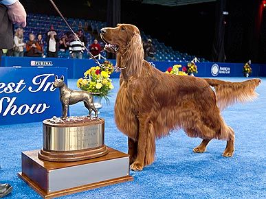 National Dog Show 2010: Clooney, Irish Setter Wins Best In Show
