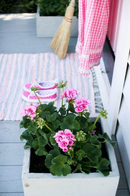 pink geraniums | Tumblr