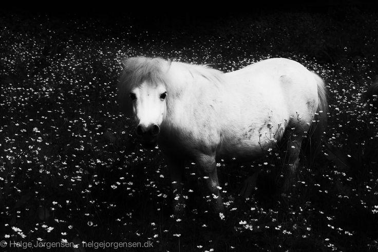 Horse by Helge Jørgensen on 500px