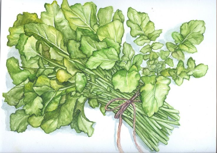 Root crops like beets, radishes, rutabagas, and turnips—and the stem crop kohlrabi—have edible greens.  Greens have a shorter shelf life than their roots.  They will continue to pull moisture from roots as long as they are attached.  Cut off the greens, leaving one inch of stem attached to the root.  Store separately.  Remove leafy carrot tops as well.  Many people do not eat carrot tops, but it is possible to do so if you are not allergic.    IMAGE SOURCE: Jessie's Art: Seven Top Turnip…