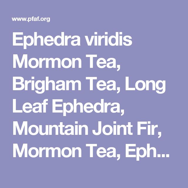 Ephedra viridis Mormon Tea, Brigham Tea, Long Leaf Ephedra, Mountain Joint Fir, Mormon Tea, Ephedra PFAF Plant Database