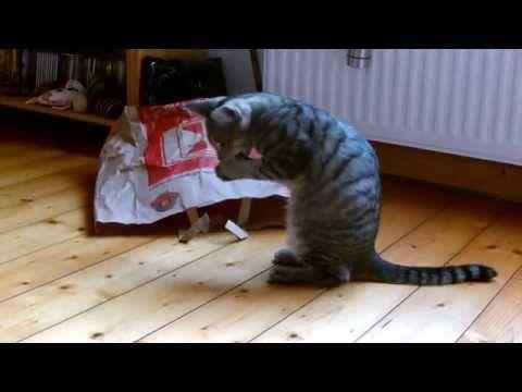 Findus & Elliot aus Osteel 06.03.13 - http://dailyfunnypets.com/videos/cats/findus-elliot-aus-osteel-06-03-13/ -  - (animal), animals, cat, cats, cute, elliot, findus, funny, katze, katzen, katzenbaby, katzenkind, kitten, kittens, kitty, meow, osteel, pet, pets, playing