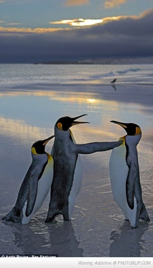 You Looking At My Girl Bro: Animal Planets, King Penguins, New Girlfriends, Animal Craze, Little Brother, My Girlfriends, Girls Bro, Emperor Penguins, God Creatures