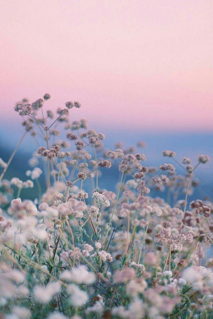 Schau dir diese schöne Welt an   – Natur – #Diese #dir #NATUR #Schau #schöne #Welt