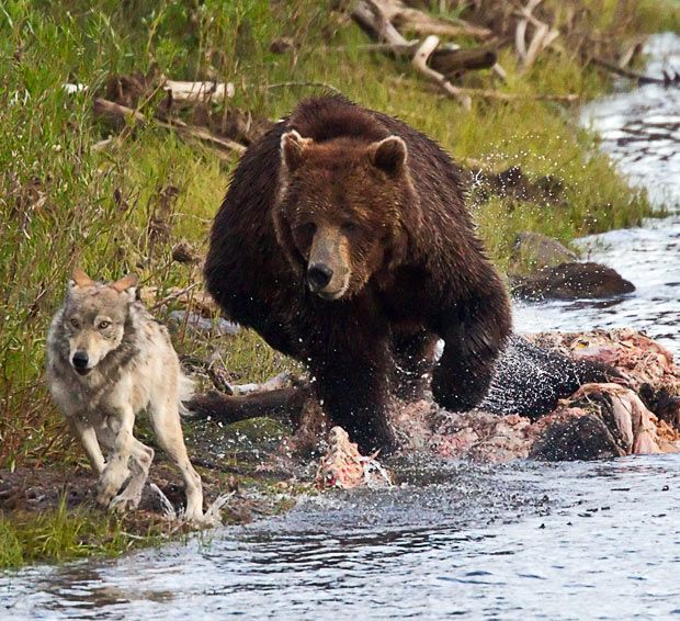 25+ best ideas about Grizzly park on Pinterest | Grizzly com ...