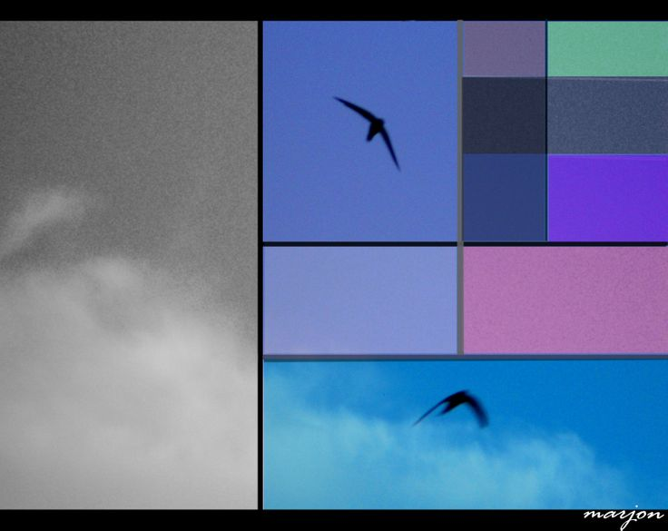 Birds freedom