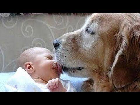Les chiens sont réunis de nouveau nés première fois [vidéo HD]