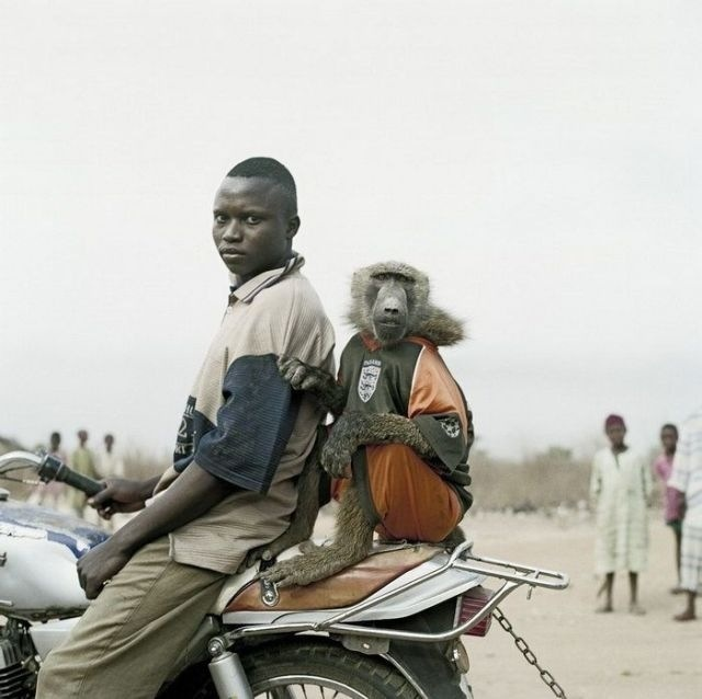 funny animal with men