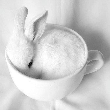 white bunny and cup