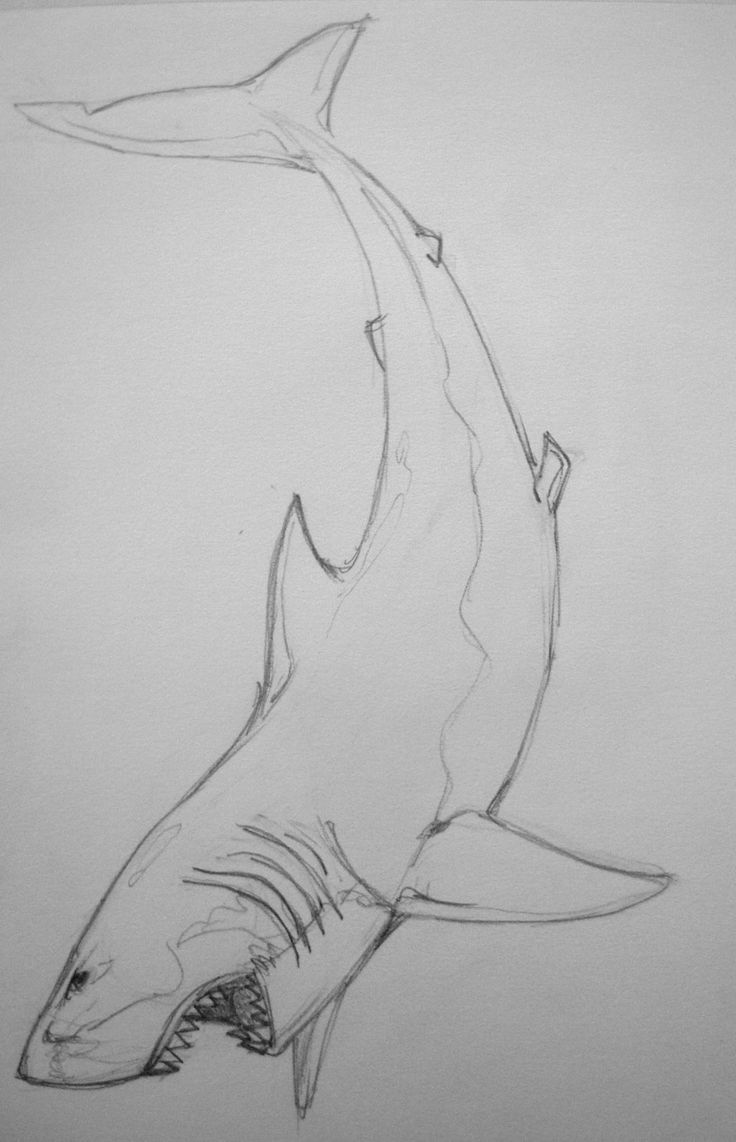 Great White Shark by KamoDin28.deviantart.com on @deviantART angle