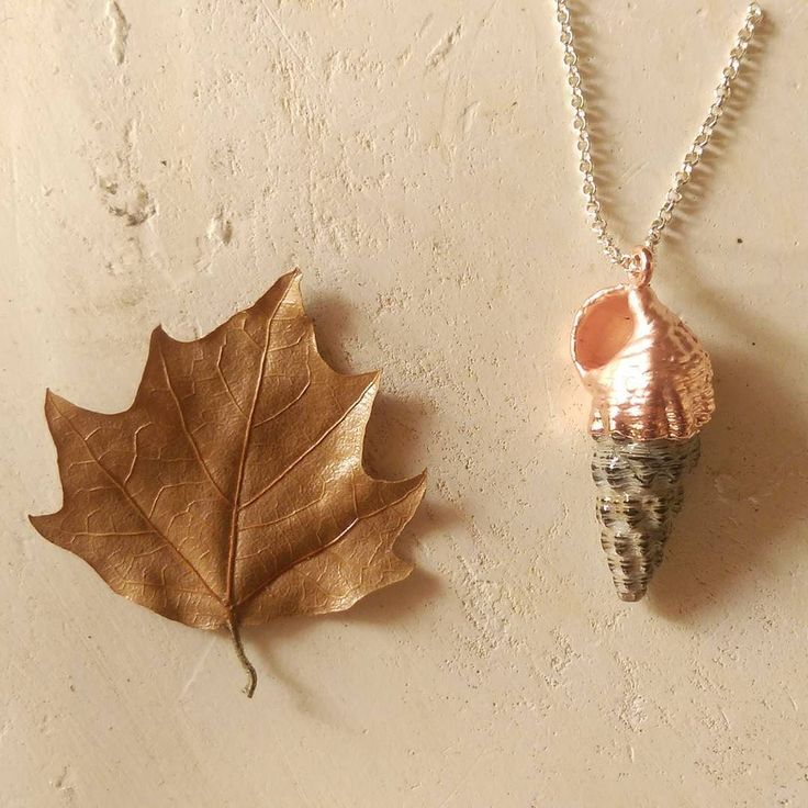 Copper and Shells