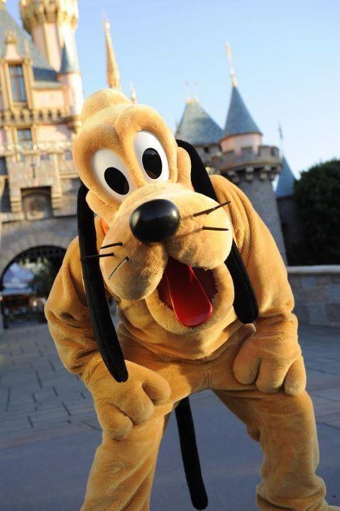 Best Day Ever Disneyland Dog