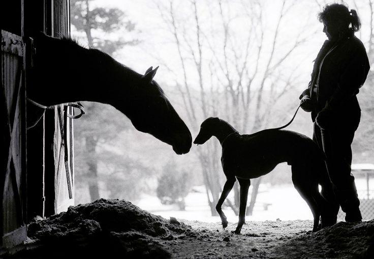 ходили картинки борзая лошадь популярность группа
