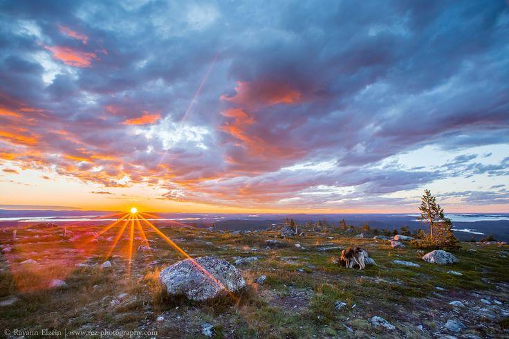 Lapland Midnight Sun, on top of Otsamo fell. Photo by Rayann Elzein. #arcticshooting #finlandlapland