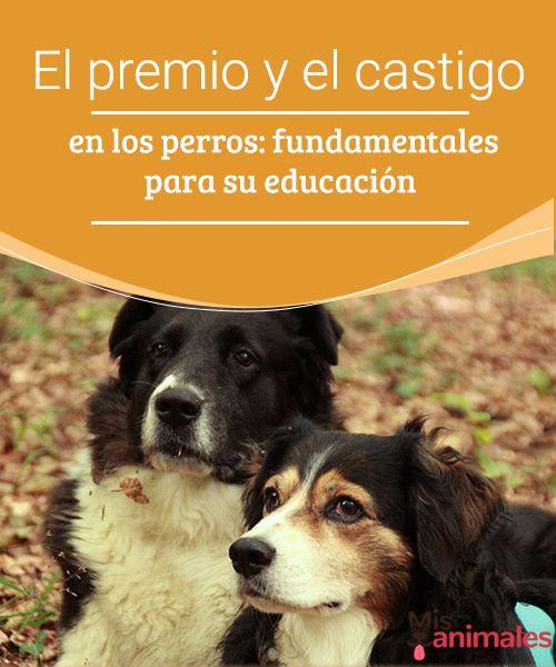El premio y el castigo en los perros: fundamentales para su educación - Mis animales  Te contamos lo eficaz que resulta el método del premio y el castigo para la educación de los perros y cómo llevar esta fórmula a cabo teniendo éxito.