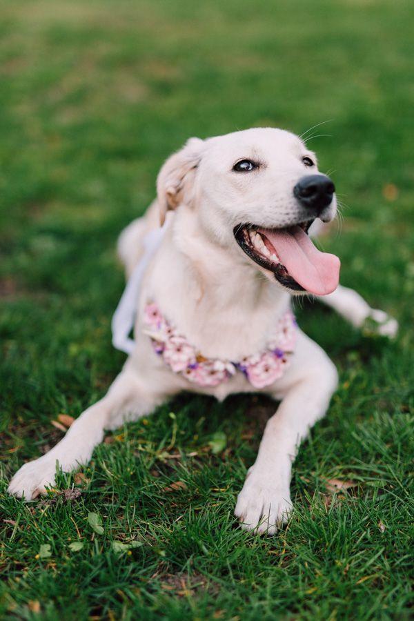 dog photo session / flowers and dog / sesja ślubna z psem / dekoracja kwiatowa dla zwierzaka / fot. Bajkowe Śluby