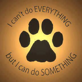Adopt, foster, donate, volunteer, share!
