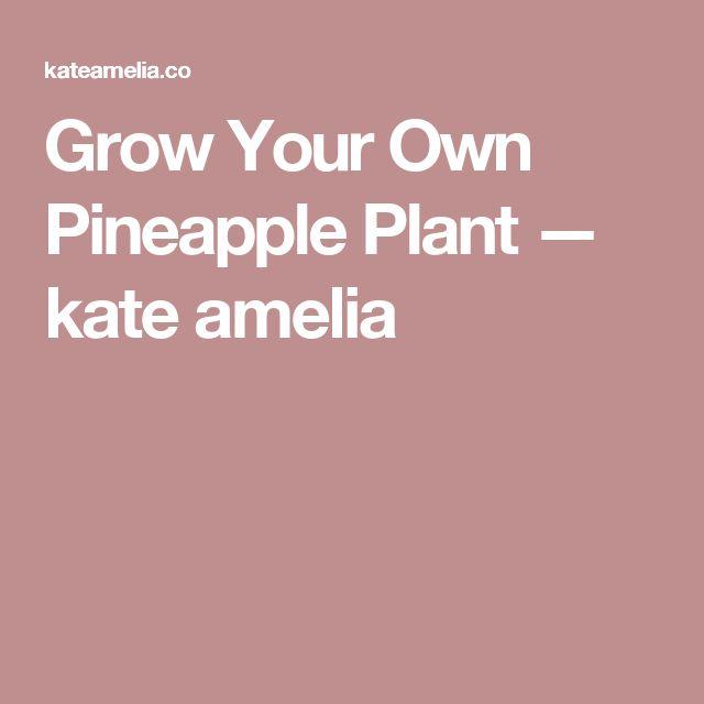 Grow Your Own Pineapple Plant — kate amelia