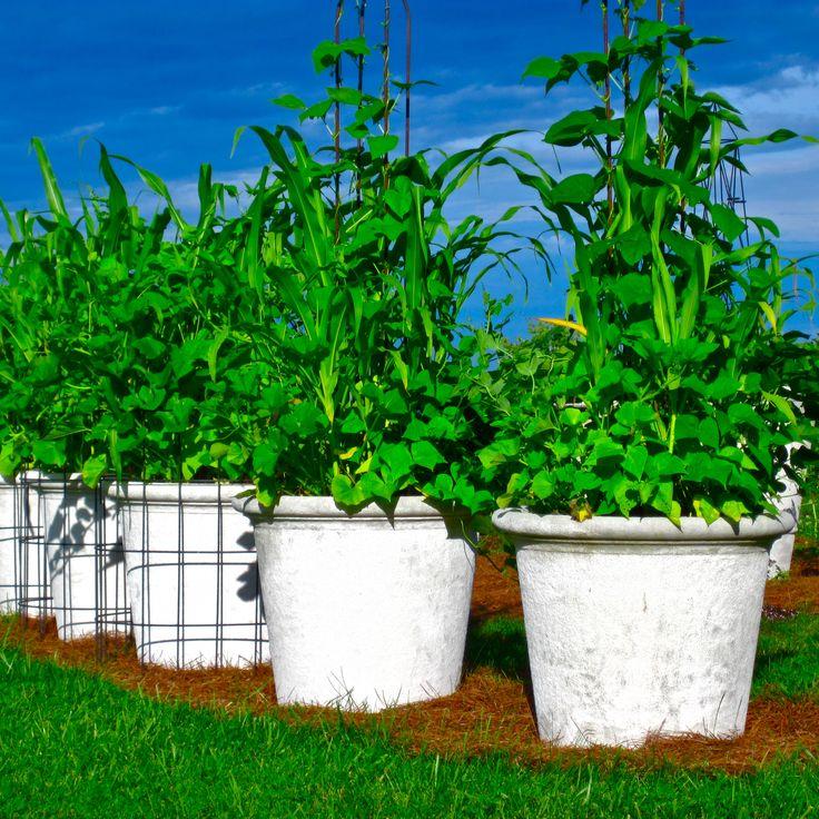 Growing Vegetables In Urban Planters: 20 Best Longshadow Planters Images On Pinterest