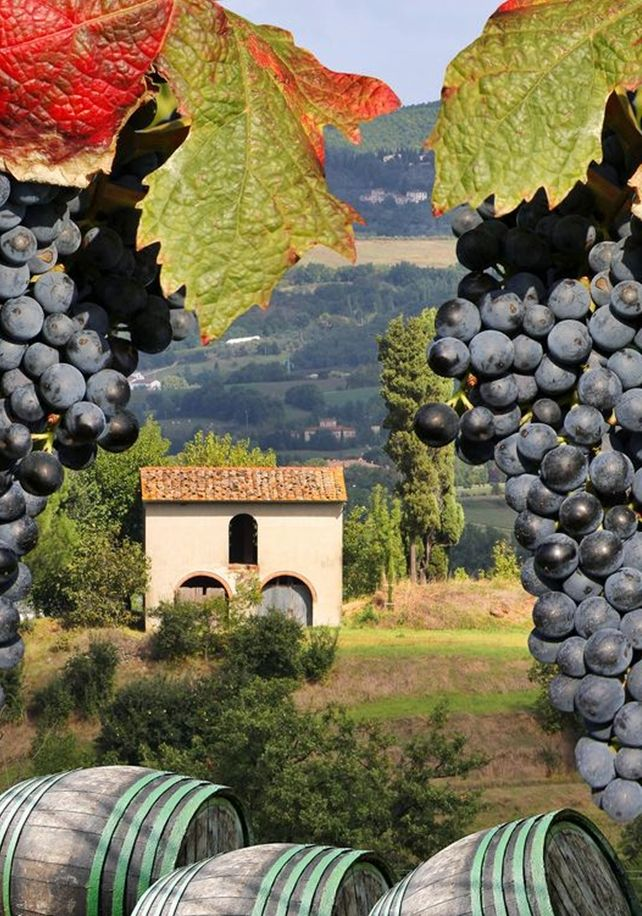Castellina in Chianti -Harvest time