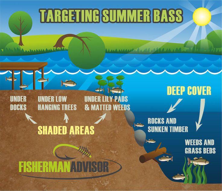 Summer Bass Fishing                                                                                                                                                                                 More