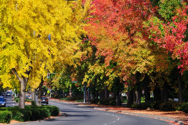 Chico, California- City of Trees.  A piece of my heart will always be in this town.