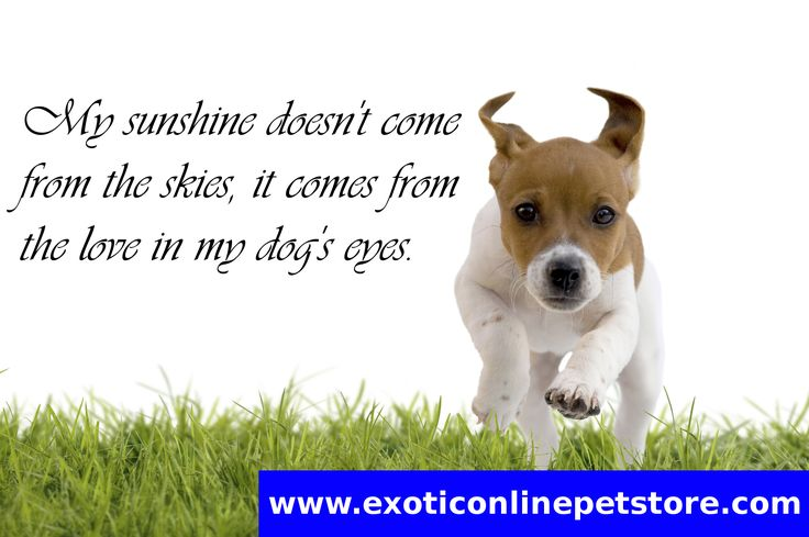 """My sunshine doesn't come from the skies, it comes from the love in my dog's eyes."" #sunshine #skies #love #dogseye #dogs http://www.exoticonlinepetstore.com/"