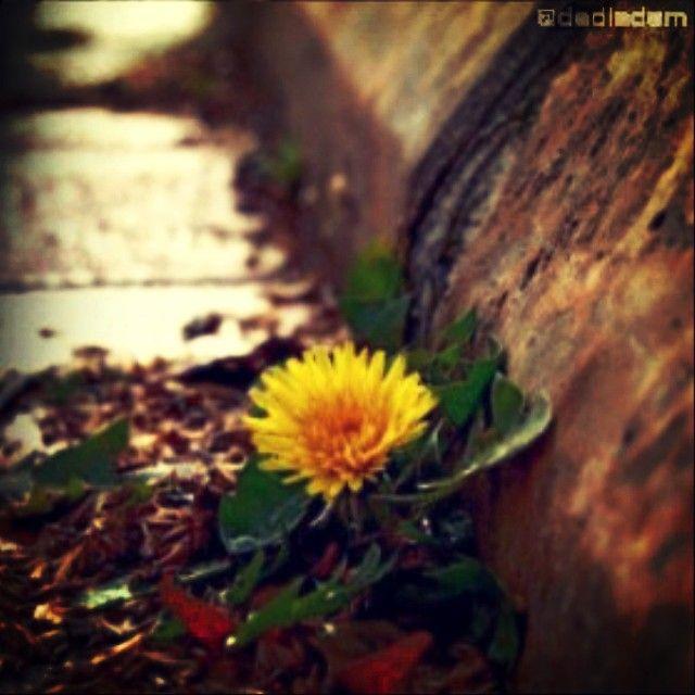 Biz şiir ruhlu adamlarız, hafız. Kaldırım taşları arasında açılmış bir çiçek bile ağlatır bizi #dediadam... swiss.