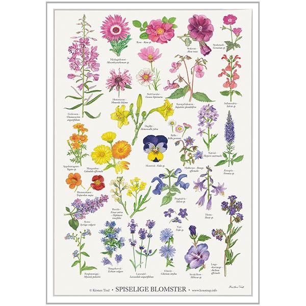 Plakat med Spiselige Blomster fra Koustrup & Co
