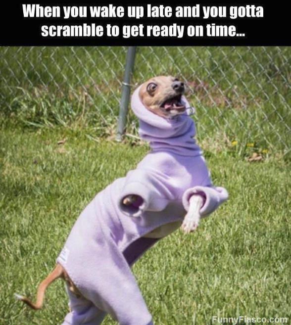 Loading Funny Dog Memes Dog Quotes Funny Funny Animal Jokes