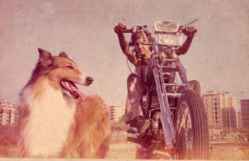 Lassie?