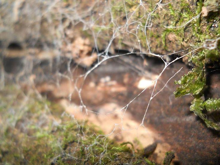 Tela de arañas