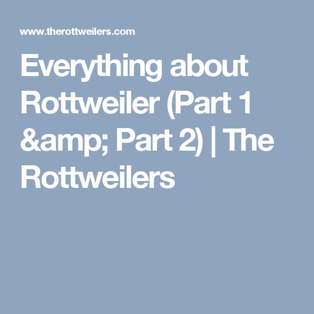Everything about Rottweiler (Part 1 & Part 2) | The Rottweilers