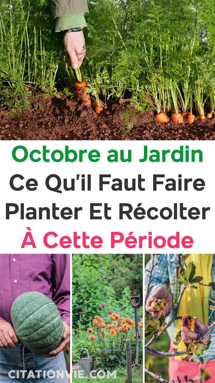 Octobre au jardin : ce qu'il faut faire, planter et récolter à cette période 🎃🍂