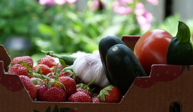 farmers market fruit basket at Toronto Botanical Garden