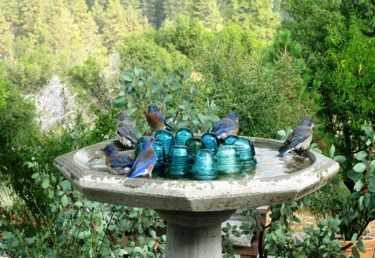 Found this birdbath and the insulators at the same yard sale.
