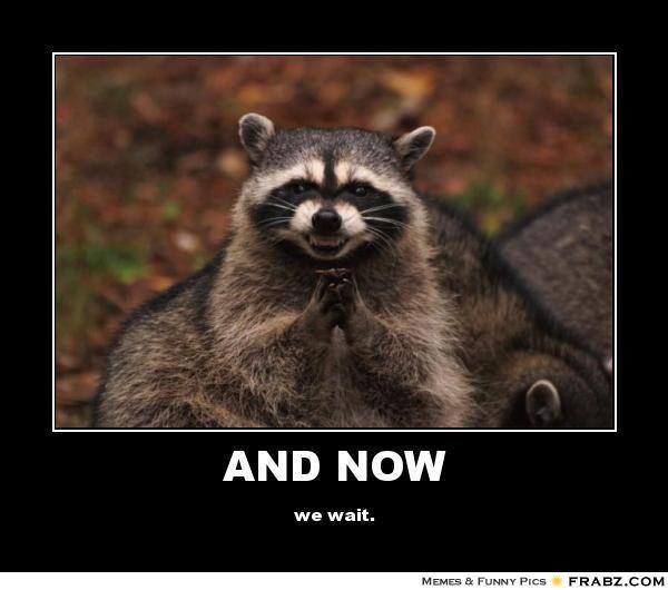 9764b15b427062c6bb79a5d73275f232 funny raccoons funny animals funny raccoon meme funny pinterest funny raccoons, raccoons