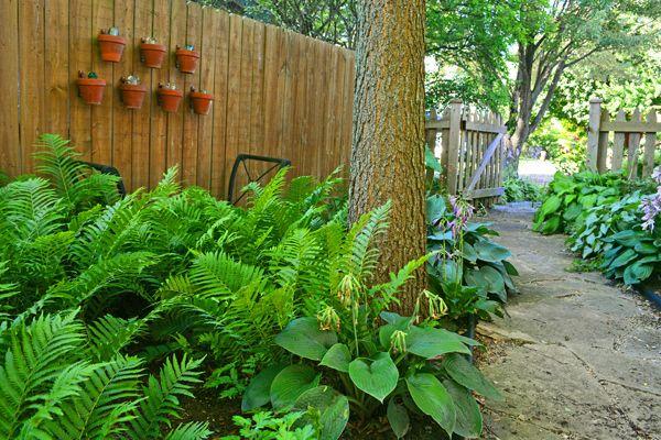 Image Result For Fern Garden Design Shade Garden Garden Planning Garden Pictures