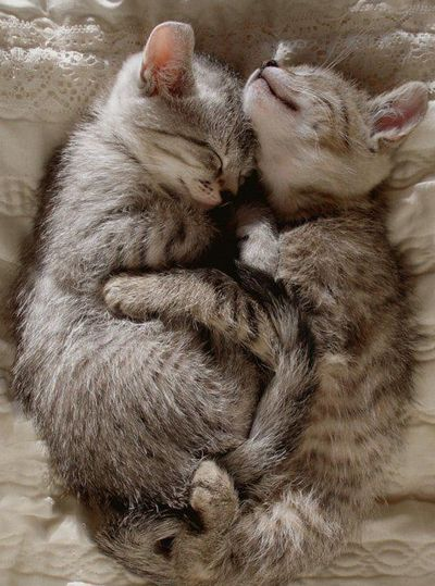 Aawww! They are cuddling!