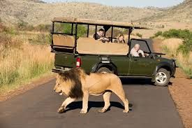 2 Day Pilanesberg Game Reserve Tour