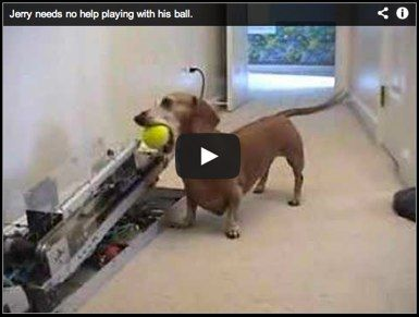 Jerry the weiner dog and the automated play fetch ball launcher
