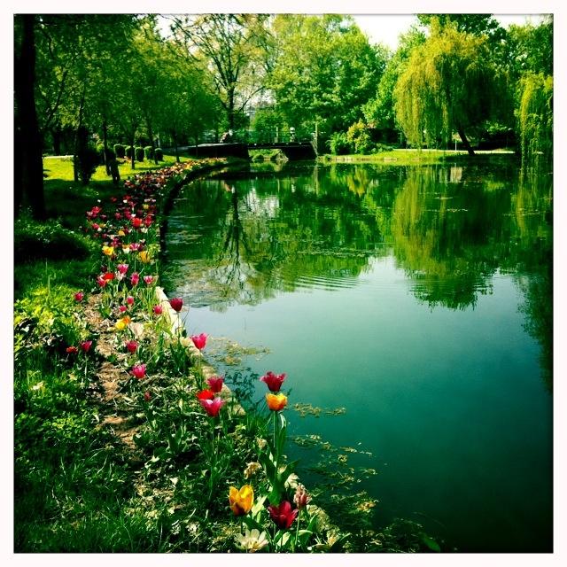 Pitesti City // spring