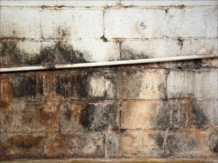 How do i get rid of mold in my basement damp basement
