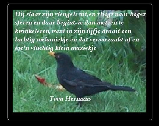 Toon Hermans. Poems and poetry