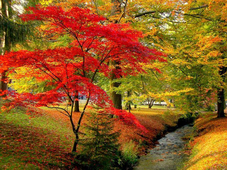Autumn scenes scene and autumn on pinterest - Pics of fall scenes ...