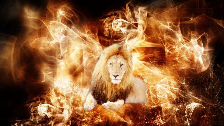 light lion wallpaper - photo #16