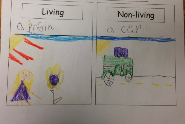 Kindergarten mini unit - Living and Nonliving